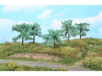 HEKI 1773 5 Olivenbäume 8 - 10 cm