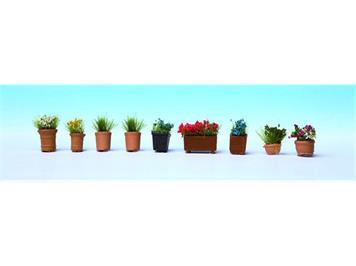 Noch 14031 Zierpflanzen in Blumentöpfen HO