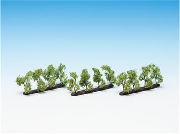 Noch 21530 Plantagenbäume