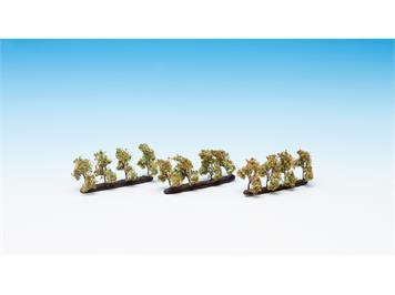 Noch 21537 Plantagenbäume mit Äpfeln N / Z