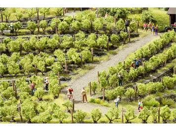 Noch 21545 Weinreben, 24 Rebstöcke 1,6 cm