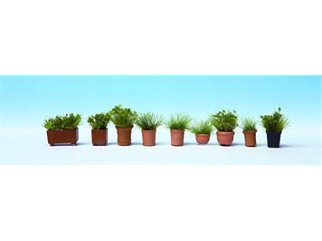 Noch 14032 Grünpflanzen in Blumentöpfen HO