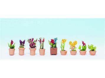 Noch 14080 Zierpflanzen in kleinen Blumentöpfen N