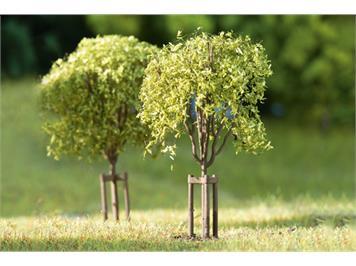 Auhagen 70950 Junge Bäume H0, TT, N