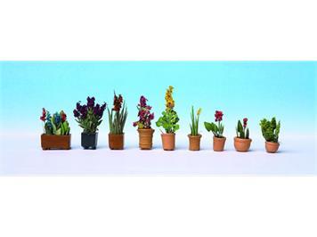 Noch 14012 Zierpflanzen in Blumentöpfen HO